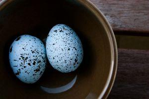 robins-egg1
